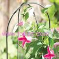 Garden hoops plant support is perfect for twining-climbing plants
